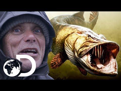 Levensgevaarlijke monster snoek – Volgens Jeremy Wade dan