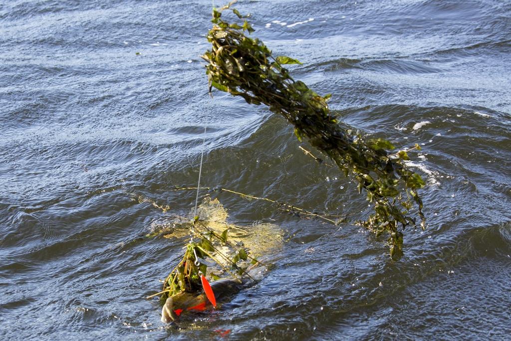 Het waterplanten debacle op de Randmeren