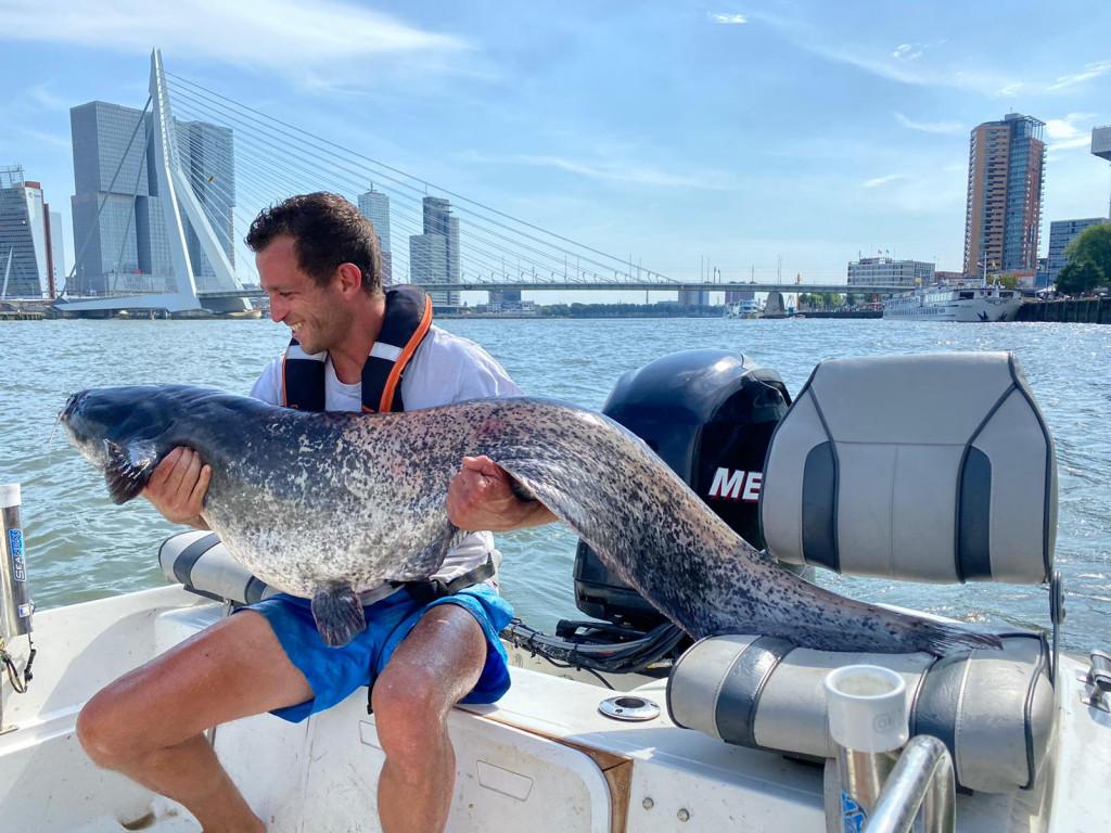 Roofmeister INSIDE – Meerval in Rotterdam & ruim 40 actuele vangstfoto's
