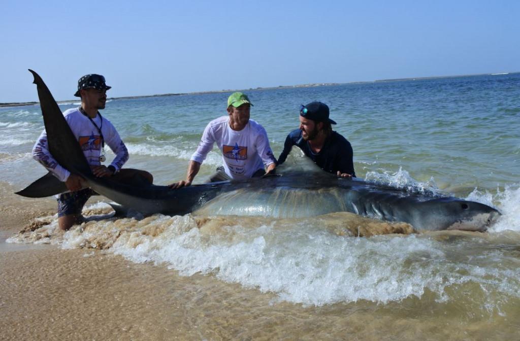 Jaws vanaf het strand – Interview met extreem grote vissen vanger