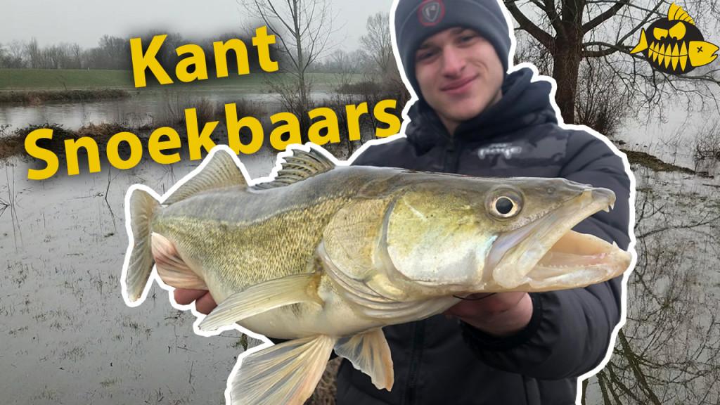 ***Roofmeister VIDEO*** Kantvissen op snoekbaars op de ondieptes met hoog water
