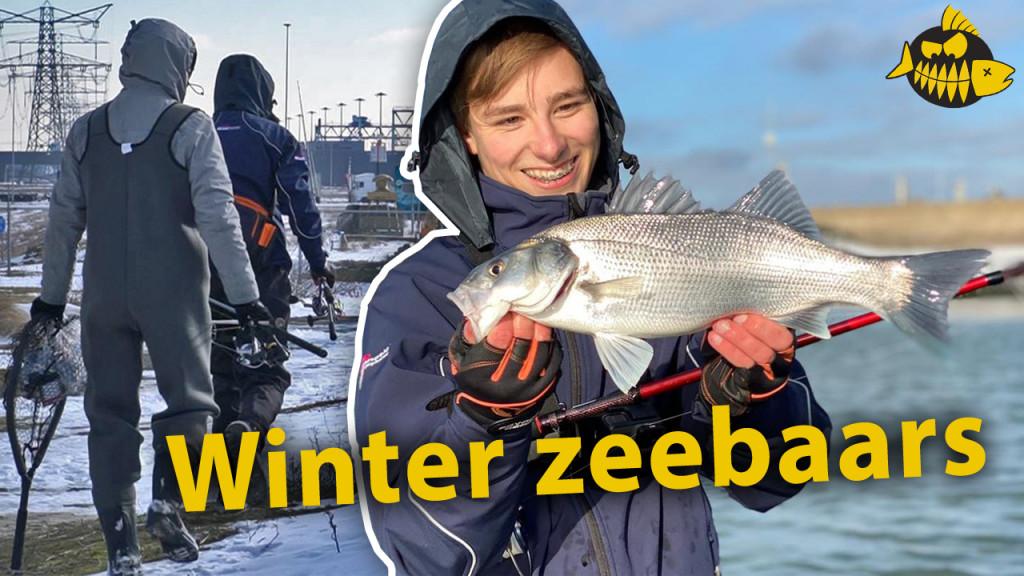 ***Roofmeister VIDEO*** Zeebaars in de winter – Succesvolle techniek voor koude stekels