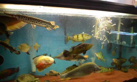 Roofmeister aquarium