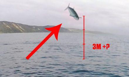 Vliegende makreel