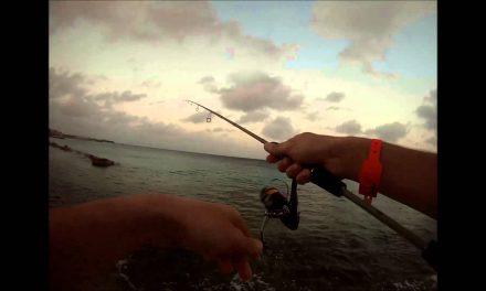 Rotsvissen – ook wel light rockfishing genoemd