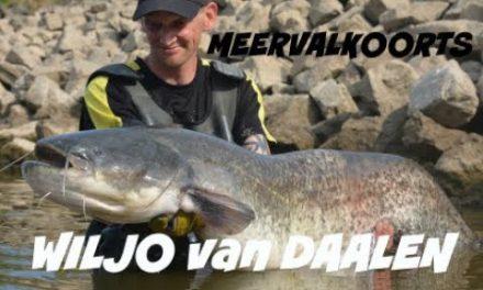 MEERVALKOORTS – Wiljo van Daalen meets KingFishers NL