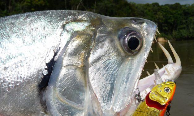 TOP 5 ZUPER DUPER bestemmingen van wereldvisser ANDRÉ DE WIT (NUMMER 3)