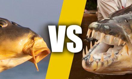 25 redenen waarom roofvissen leuker is dan karpervissen
