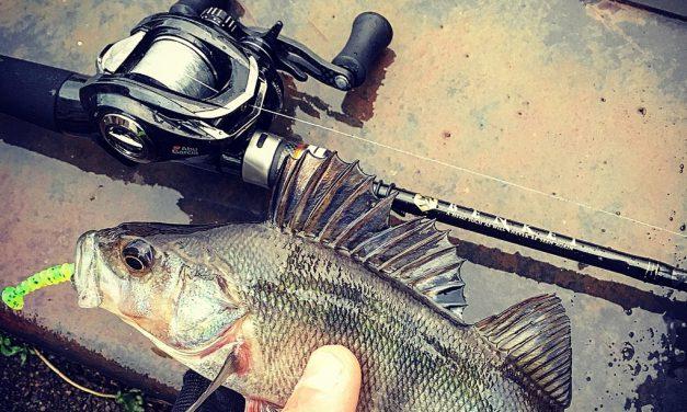 Finesse to the max – Rico Stougie over zijn verfijnde visserij