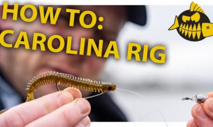 How to: Carolina rig van A tot Z met LUC COPPENS