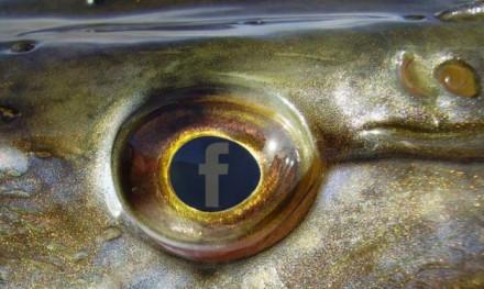 Social media en roofvissen – 3 experts aan 't woord