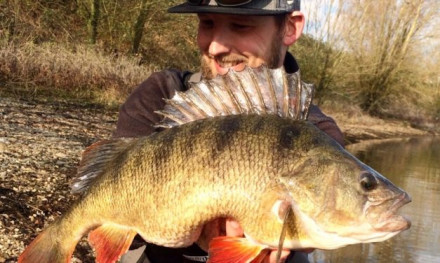 Tackle Meister Review – Zman TRD Crawz – Hubba Bubba shads
