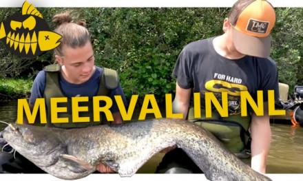 ***ROOFMEISTER VIDEO*** Zo vang je meerval in Nederland