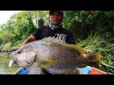 Beast mode on – Papuan bass