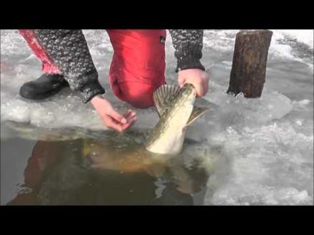 IJs hakkuh met Dutch Anglers – Met dood aas op snoek