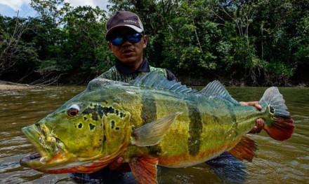 Bucket-list-vistrip in de jungle van Colombia – Wie durft?