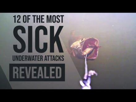 De 12 meest spectaculaire onder water aanbeten van Sean Wit