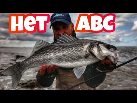 Zo vis je op zeebaars – Tal van bruikbare tips