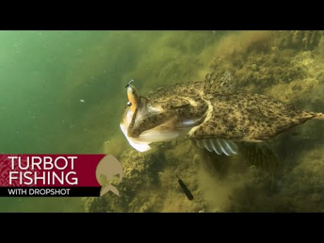 Vissen op zicht met de dropshot op… XXL platvis