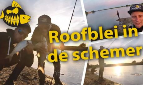 ***Roofmeister VIDEO*** Roofblei pret in de avonduren – Hakkert & Honders