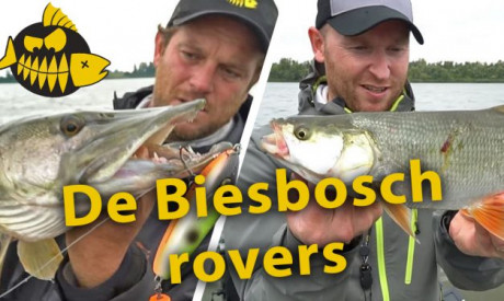 ***Roofmeister VIDEO*** Snoek VS roofblei op de Amer in de Biesbosch