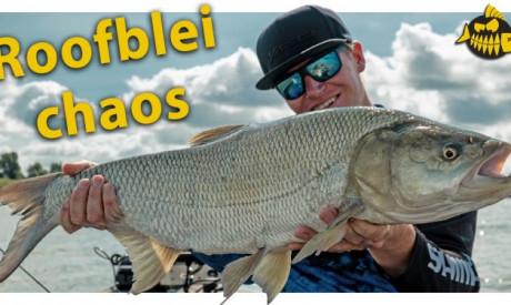 ***Roofmeister VIDEO*** De BESTE visdag OOIT – MEGA aantallen & GIGA vissen