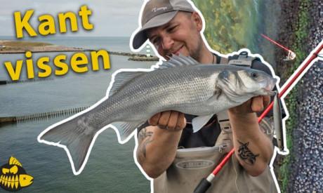 ***Roofmeister VIDEO*** De zeebaars STEKKEN in de Europoort – ALLES over kantvissen